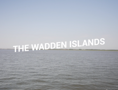 SeaQurrent joined the Wadden Islands trade mission, the first fossil free trade mission ever
